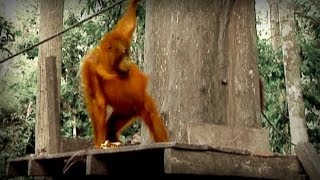 Jungle of the Red Spirit (full documentary)
