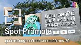 รายการเจาะใจ Spot Promote : ศูนย์การเรียนรู้ระบบนิเวศป่าชายเลนสิรินาถราชินี [17 พ.ย 61]