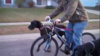 Onyx And Xander (great Danes) On A Biking Ruff Break