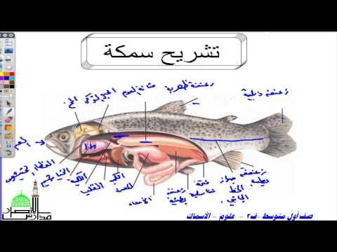 أول متوسط  ف2 علوم الأسماك