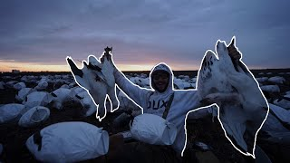 HUNTING SNOW GEESE AFTER DARK!! (The Pintails Did It Dirty)