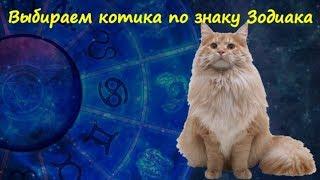 ВЫБИРАЕМ КОТИКА ПО ЗНАКУ ЗОДИАКА  CHOOSE CAT BY ZODIAC SIGN