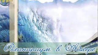 Океанариум в Адлере, самый большой в России(Интересная достопримечательность Адлера, куда можно сходить с детьми. Это самый большой океанариум в Росси..., 2015-06-05T11:06:50.000Z)