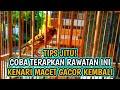 Perawatan Kenari Macet Bunyi Agar Gacor Kembali  Mp3 - Mp4 Download