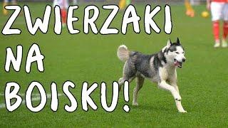 Dogrywka #17: Zwierzaki na boisku!