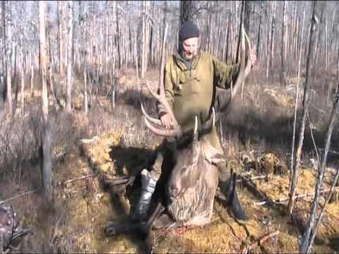 Ваба на лося: Охота