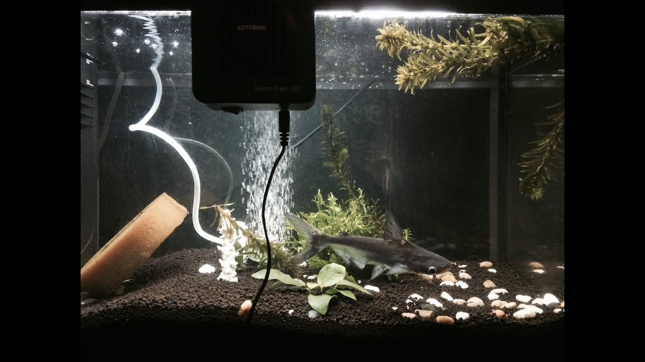 Setup my ferplast fish tank whit water filter e air pump let's just fish ita - YouTube