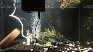 Setup my ferplast fish tank whit water filter e air pump just fish ita