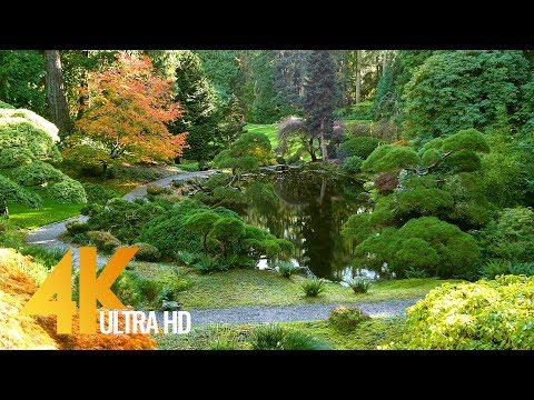 4K Autumn Foliage - Relaxing Video with Soothing Music - Beautiful Fall - Short Preview