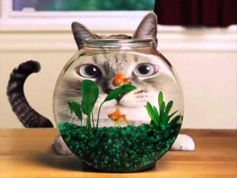 Видео смешилка про котов видео