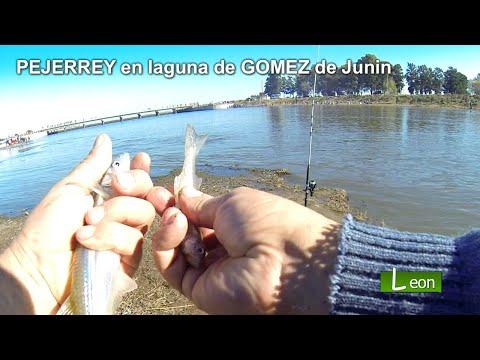 Pesca de PEJERREY en laguna de GOMEZ de Junin