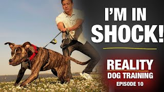 I DIDN'T KNOW what I was getting into…  [Reality Dog Training Ep 10]