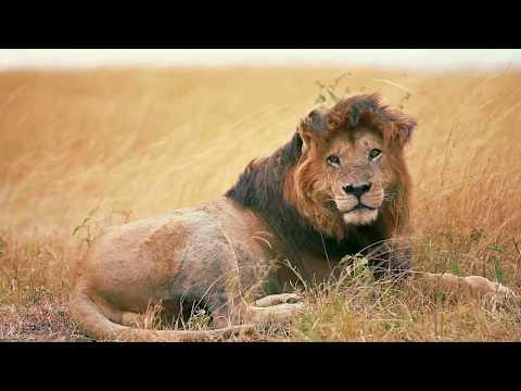 Wildlife Conservation Society is a Trailblazer