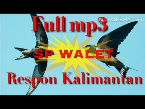 Suara Panggil Burung Walet Super Sedot Walet Tetangga Full Mp3