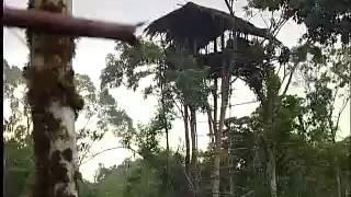 Asmat - Api di Korowai - Jejak Petualang Trans7