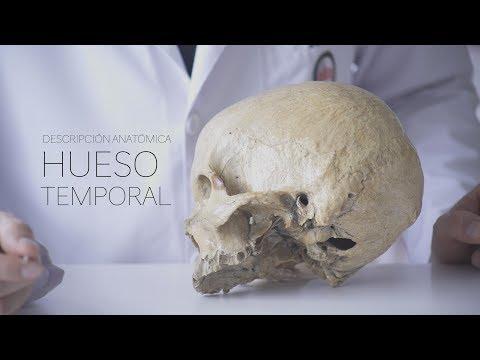 Cap. 1 HUESO TEMPORAL Análisis y Descripción Anatómica