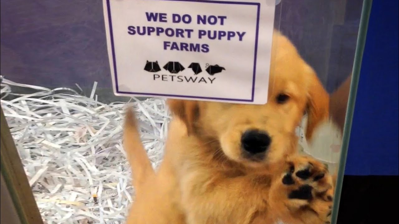 The puppy factory con - YouTube