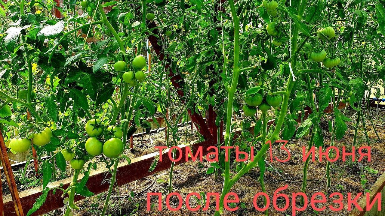 Обрезала томаты, теперь все пропало Фотосинтез и обменные процессы нарушила Отправляют учиться
