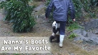 Never Underestimate A Panda's Obssession On Boots! | iPanda