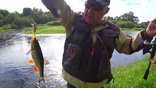 Река Западная Двина Пешая Рыбалка