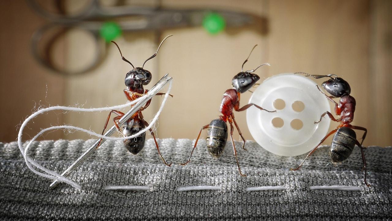 Прикольный муравей картинки