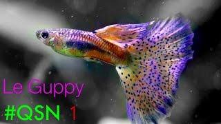 #QSN : 1. LE GUPPY