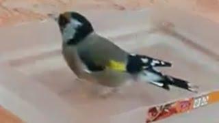 فوائد اغتسال الطيور بخل التفاح والماء