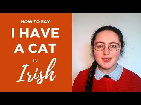 How to say 'I have a cat' in Irish Gaelic