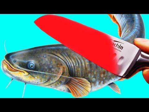 EXPERIMENT 1000 Degree KNIFE Vs CATFISH