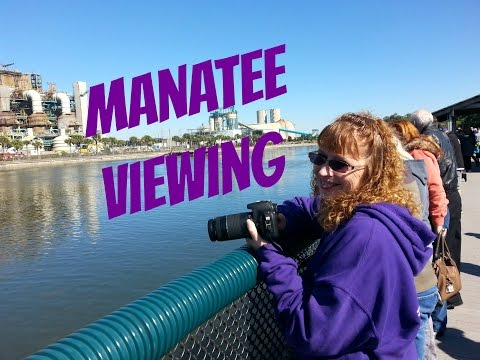 Visiting Tampa Electric Manatee Viewing Center