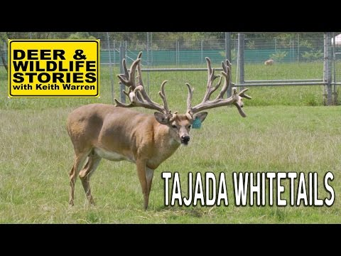 Tajada Whitetails | Deer & Wildlife Stories