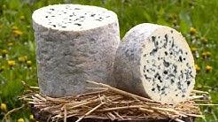 Terroir : un des plus vieux fromages français délicieux et persillés