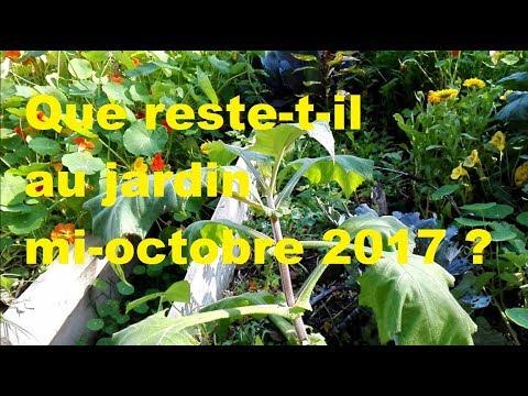 Que reste t il au jardin mi octobre 2017 ? (permaculture)