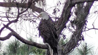 SWFL Eagles_Harriet Embraces The Peace & Quiet Of This Mother's Day 05-14-17 thumbnail