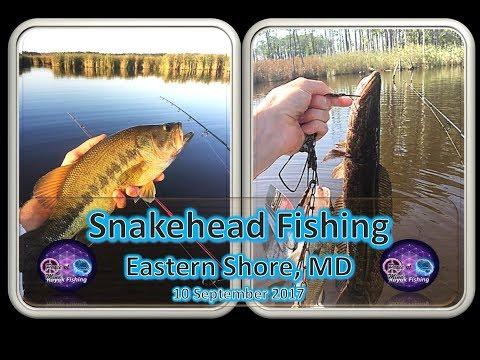 Snakehead Fishing, Eastern Shore, MD, 4 September 2017