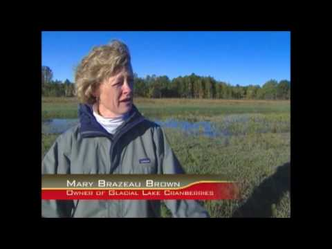 The Business of Cranberries