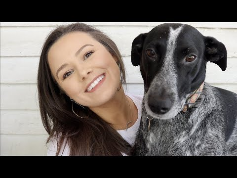 Treating My Dog's Allergies | Veterinary Medicine