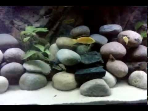 malawi aquarium 370l neue einrichtung youtube. Black Bedroom Furniture Sets. Home Design Ideas