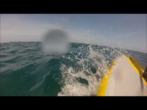 Tiwal rental - Beautiful TIWAL sailing session with dolphins