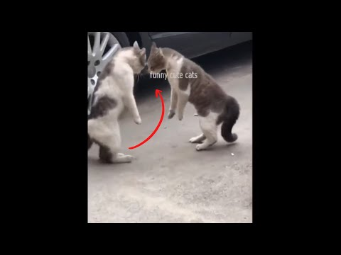 Funny Cat Videos - Cute Cat Videos 2021😹  ! FUNNY CUTE CATS#16