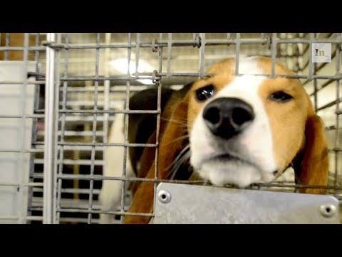 Inside the Barbaric U.S. Industry of Dog Experimentation