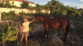 Влог из Доминиканы. Я встретила лошадь и кота с разноцветными глазами