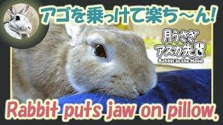 アゴを乗っけて楽ち~ん!【 ウサギのだいだい 】 2019年1月18日 thumbnail
