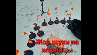 ЖОР ЩУКИ на жерлицы ФЛАЖКИ ВСТАЮТ один за другим Зимняя рыбалка 2021