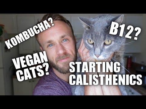 Q&A | Vegan Cats, Juicing, Blenders, Flax Seed, Dragon Flags