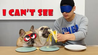 French Bulldogs Do Blindfolded Taste Test With Their Human **Funny Reaction