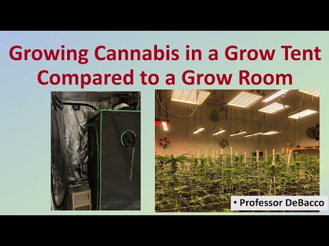 Growing Cannabis in a Grow Tent Compared to a Grow Room