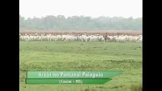 FAZENDAS À VENDA NO PANTANAL / MS