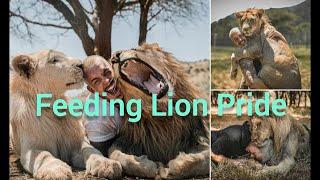 Dean Schneider Feeding Hungry Lion Pride- Compilation|| Oasis Family|| Hakuna Mipaka || Love Animals