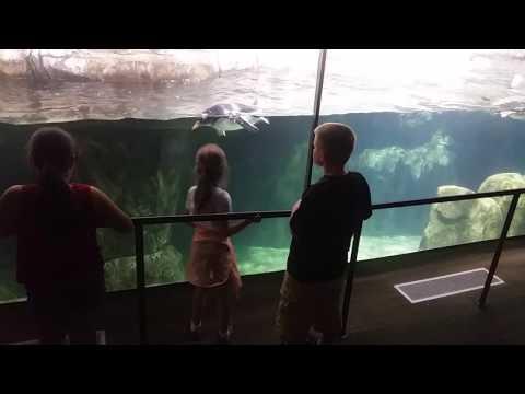 Penguins Omaha Henry Doorly Zoo Scott Aquarium